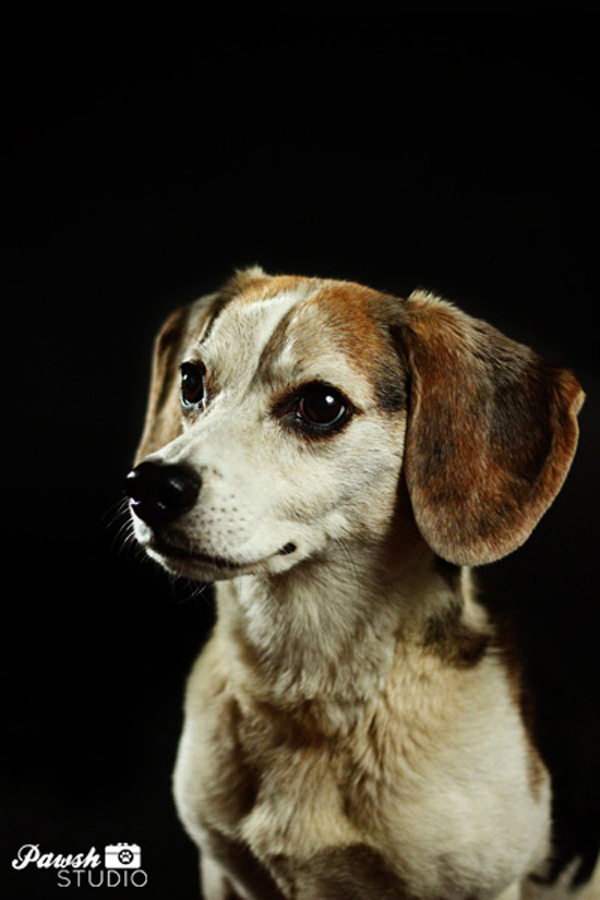 Toronto dog-photographer-pawsh-studio-shadow-dog-11