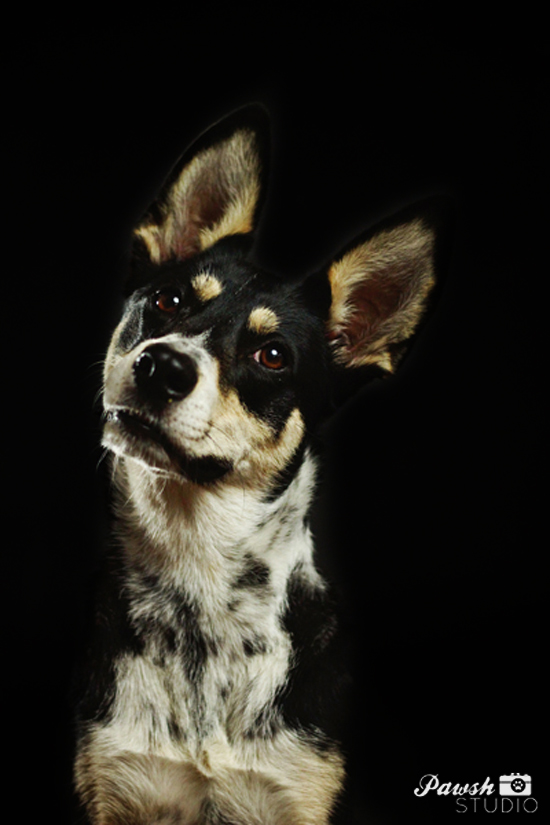 Toronto-pet-photographer-Pawsh-Studio-shadow-dog-10