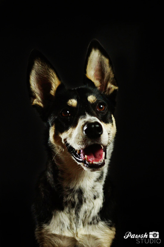 Toronto-pet-photographer-Pawsh-studio-shadow-dog-2