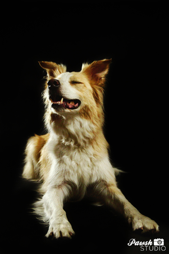 Toronto-pet-photographer-Pawsh-studio-shadow-dog-8