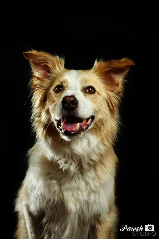 Toronto-pet-photographer-pawsh-studio-shadow-dog-12
