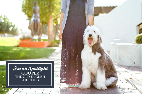 arizona-pet-photographer-Pawsh-magazine-cooper-1