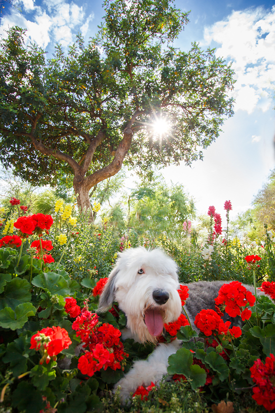 arizona-pet-photographer-Pawsh-magazine-cooper-4