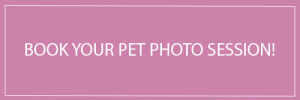toronto-pet-photography-book-now-button-purple