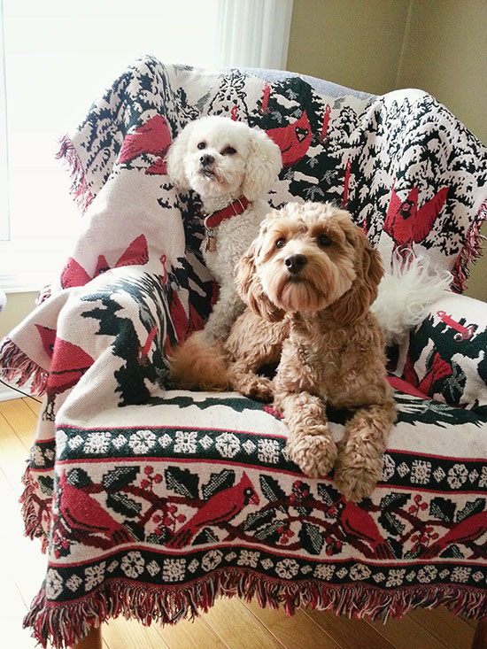 stylish-dog-magazine-poodles