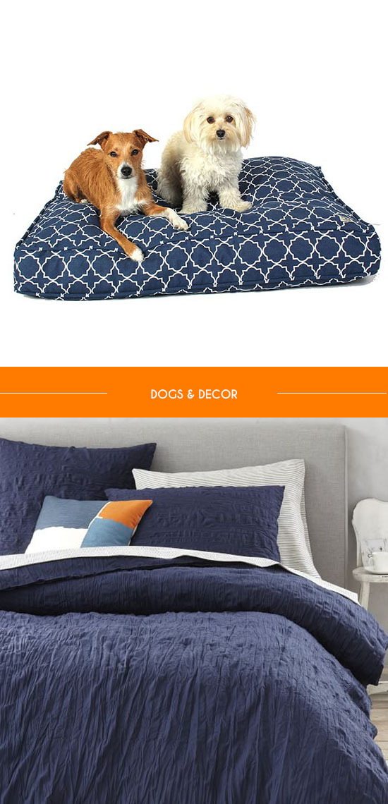 blue-dog-bed
