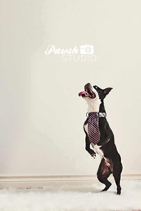 Toronto dog photographer