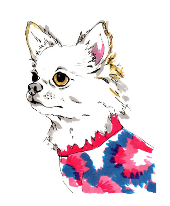 custom-dog-portraits-jo-chambers-4
