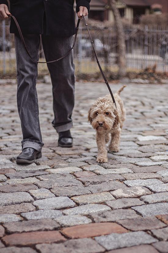 toronto dog blog
