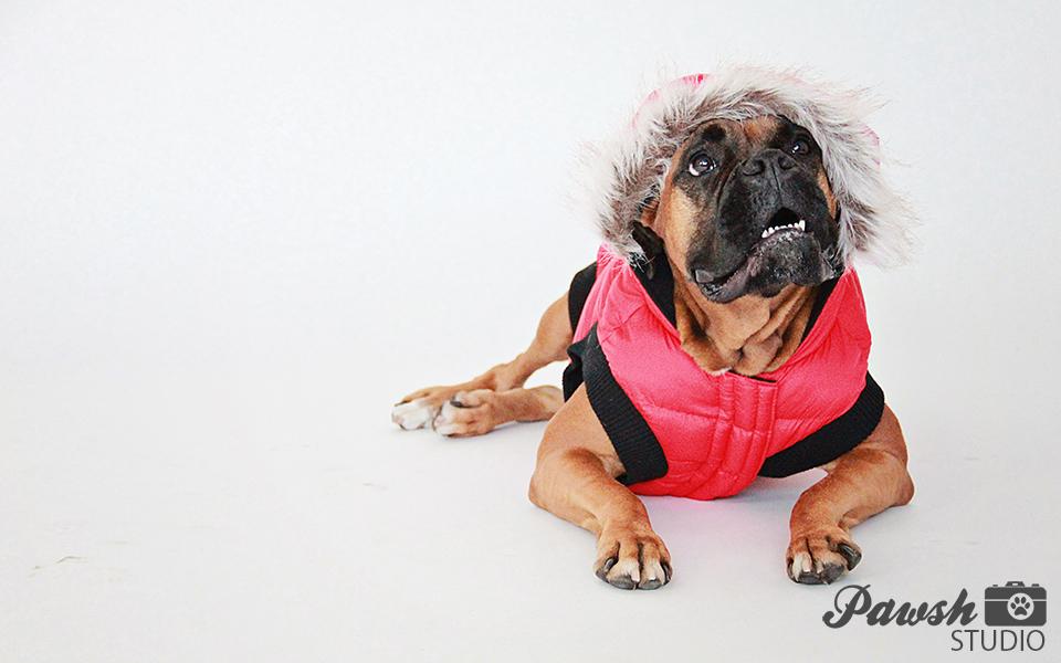 dog photographer toronto