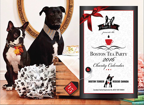 boston-terrier-rescue-canada-2016-calendar-front-cover