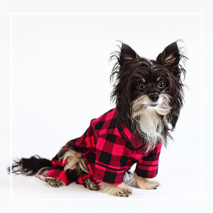 toronto-pet-photographer-pet-photography-package-300x300