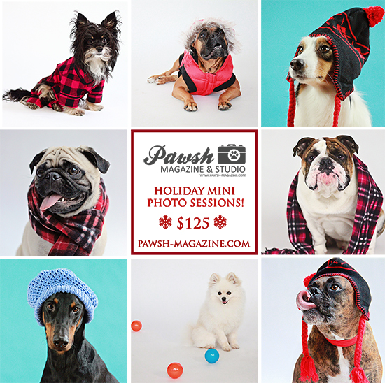 toronto-holiday-mini-sessions-pet-photographer