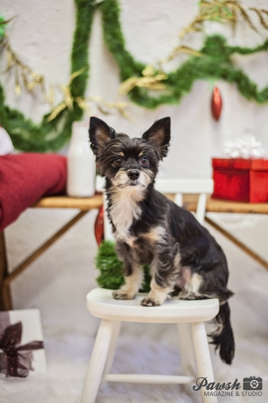 toronto dog photographer