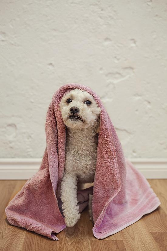 toronto dog magazine