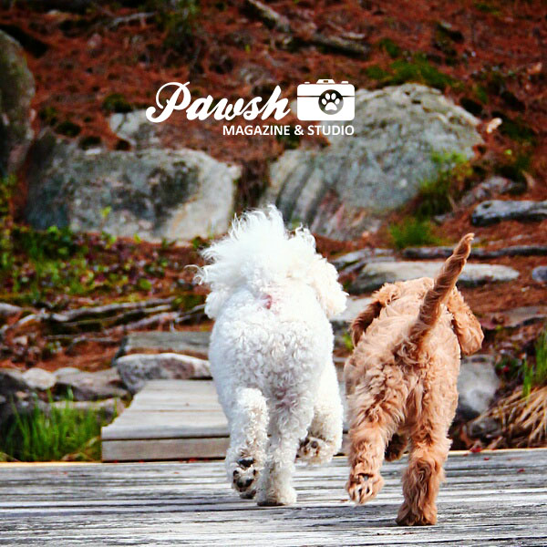 toronto-dog-blog-pawsh-farwell
