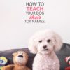 teach dog toy names and words