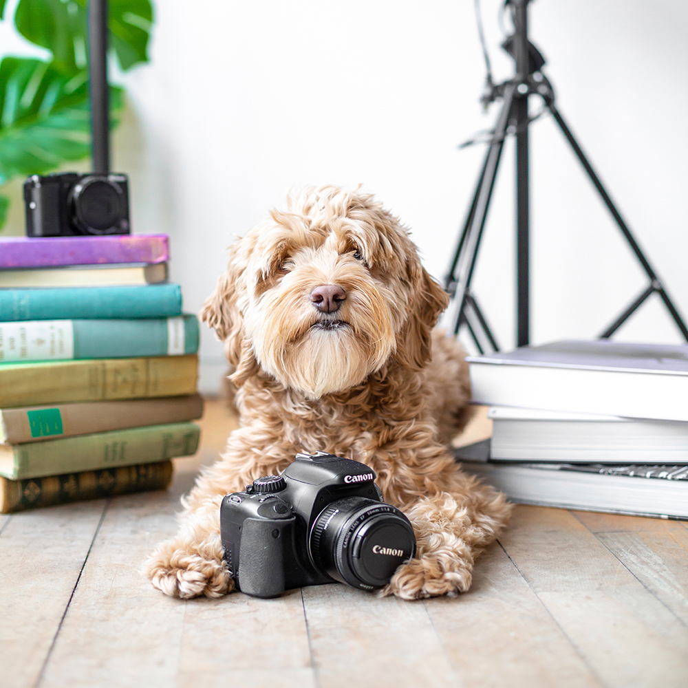 commercial dog photography studio