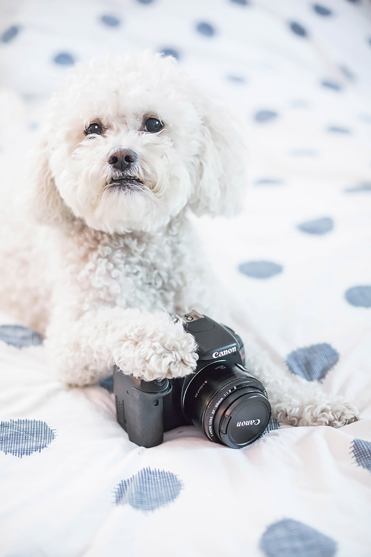dog and camera photography