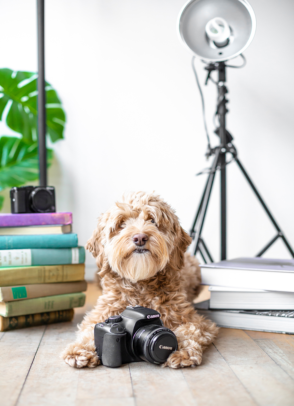 tips for how to become a professional pet photographer