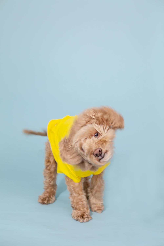 toronto dog photography