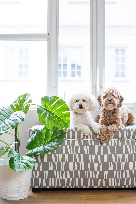 dog-friendly plants