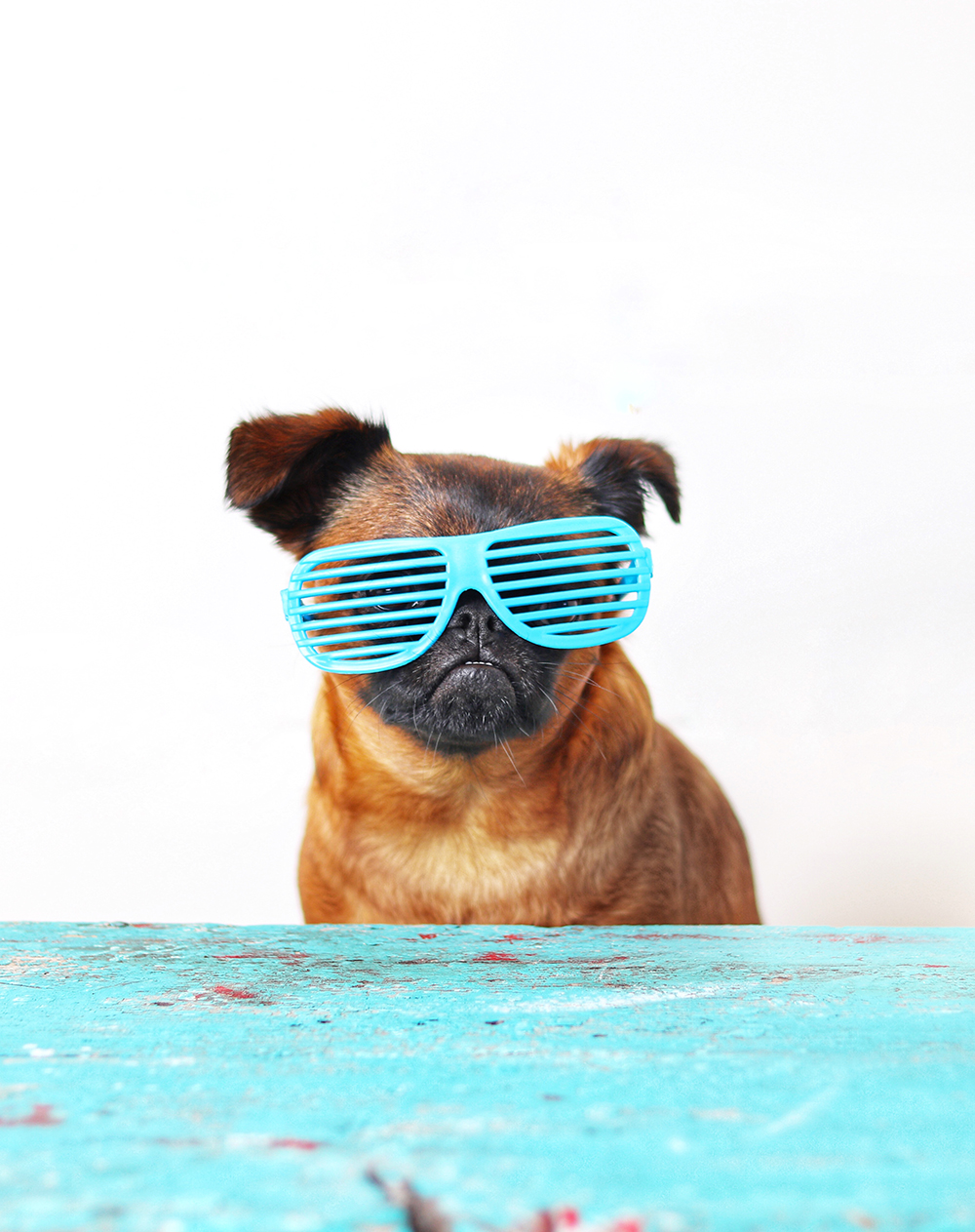 hacks for running a successful dog Instagram account