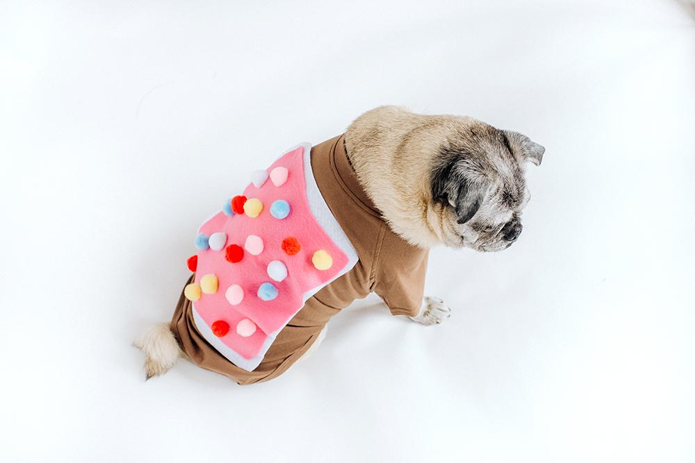 the best dog Halloween costume ideas