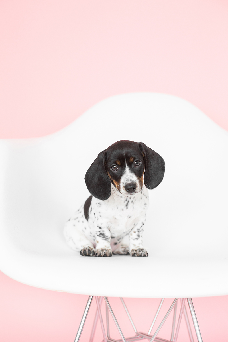 puppy photography tips
