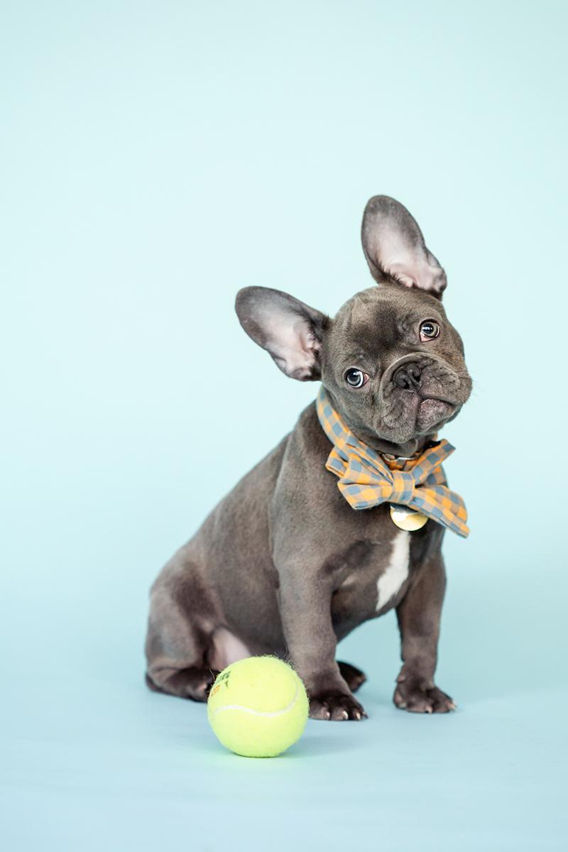 puppy photo tips